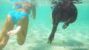 Woman swimming with pig in the clear waters of Exuma