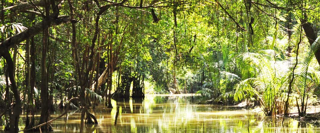 Mangrove River with lush green jungle surroundings in Takua Pa (ตะกั่วป่า) in Phang Nga Province.
