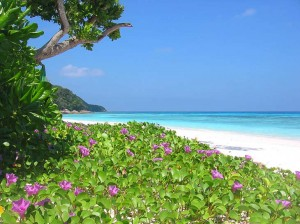 Tropical flowers on stunning white sand beach and turquoise sea water at Virgin Island (Koh Tachai), Thailand