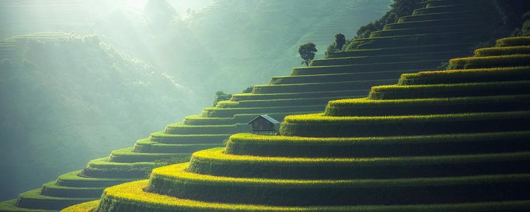 Bali rice field terraces