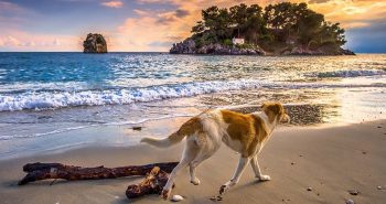 Dog walking on a Greek beach during sunset. Crete beaches.